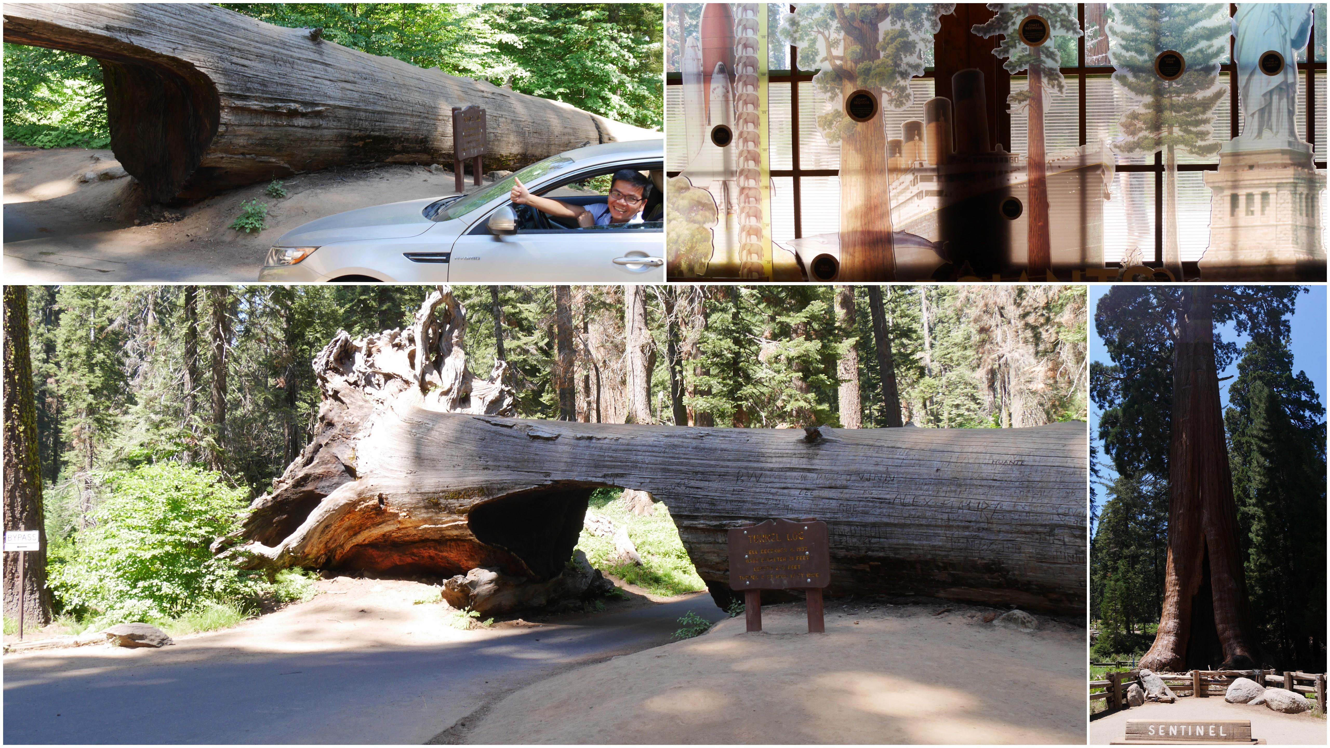 Sequoia之旅
